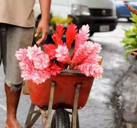 爸爸去哪儿拍摄地-斐济